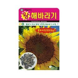 왕해바라기씨앗 10립 해바라기 꽃씨앗 종자