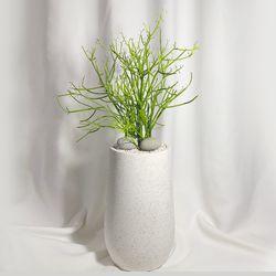 공기정화식물 유포르비아 파티오라금 인테리어식물 테라조