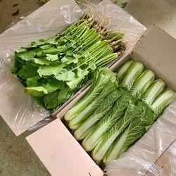 [무료배송] 산지직송 열무 2kg+얼갈이 2kg