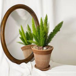 인테리어식물 여우꼬리 메어리 이태리 토분 받침풀세트