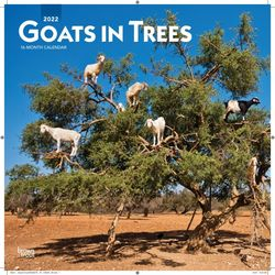 Goats in Trees (BT 미국캘린더)