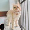 개달당 오가닉 알렉산드롱 레이스 고양이케이프 강아지케이프