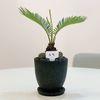 이국적인 공기정화식물 인테리어 집들이선물 소철 테라조 화분