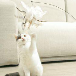 펫트리움 흡착 깃털 스틱 고양이 장난감