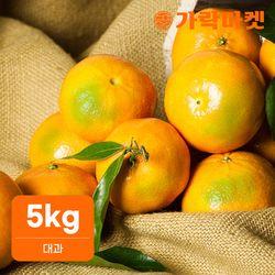 [가락마켓] 노지 새코미 제주 감귤 5kg (대과)