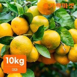 [가락마켓] 노지 새코미 제주 감귤 10kg (대과)