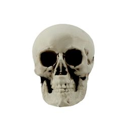 두개골 해골 모형 4호 (7.5X6X5.3cm)
