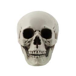 두개골 해골 모형 3호 (11X9X8.5cm)