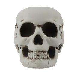 두개골 해골 모형 2호 (18X13.5X12cm)