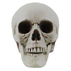 두개골 해골 모형 1호 (20X16X15cm)