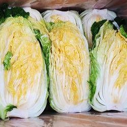 [특가/무료배송] [미미의밥상] 산지직송 알찬 해남 절임배추 20kg (7-10포기)