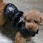 강아지옷 댕댕이 개패딩